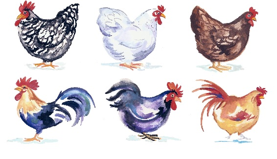 Barnyard Chickens 55 mm x 49 mm- Set of 6