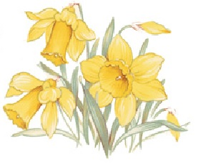 Golden Daffodils - 76mm x 50mm - Set of 2