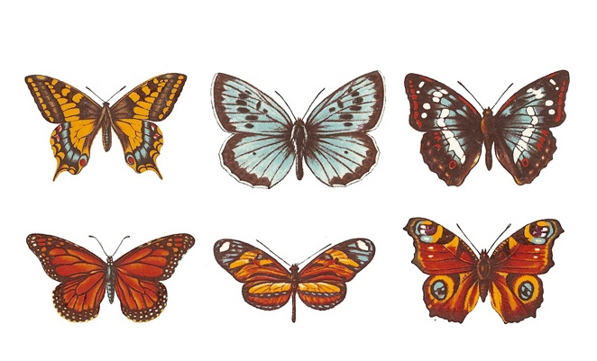 Butterflies - Small - 50 mm - Set of 6