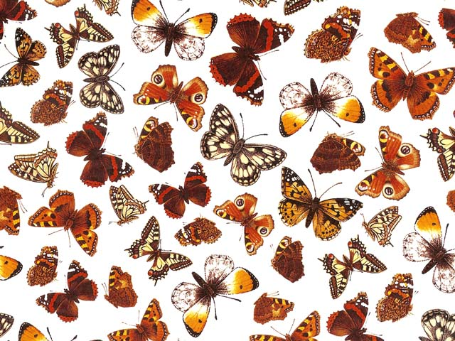 Butterflies on Clear Chintz 200 mm x 200 mm