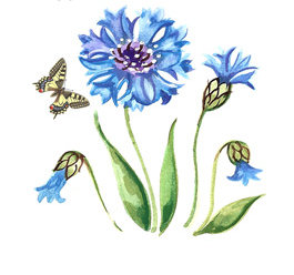 Cornflower - Small - 50 mm - Set of 3