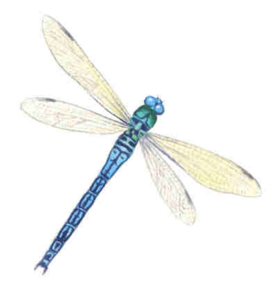 Dragonflies - Large - 65 mm x 50 mm - Set of 4