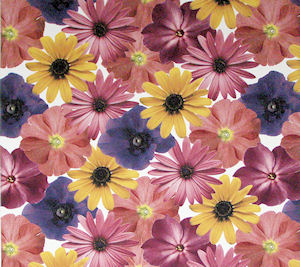 Petals Chintz 200 mm x 200 mm