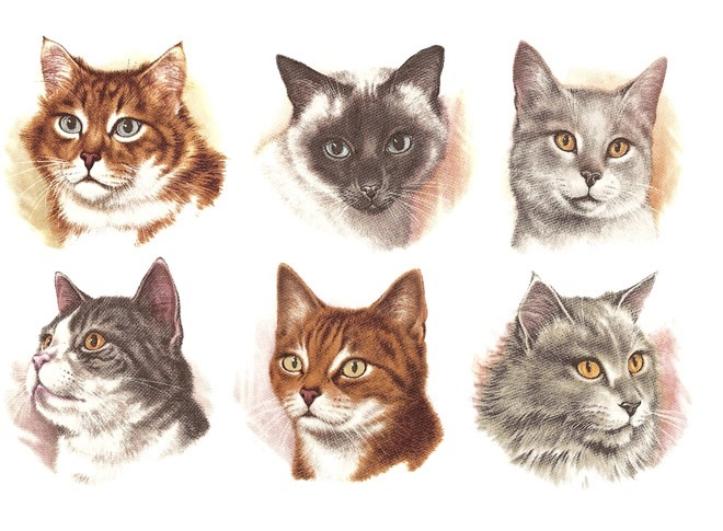 Cat Heads 50 mm - Set of 6