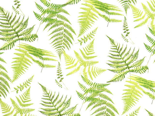 Fern Chintz 200 mm x 200 mm
