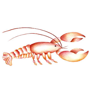 Lobster - Small - 35 mm - Set of 6
